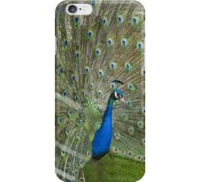 Peacock iPhone Case iPhone Case/Skin