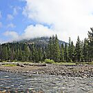 Yellowstone morning by Debbie Roelle
