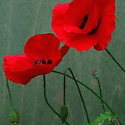 Poppies by Forfarlass