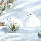 Winter Ptarmigan by ddonovan