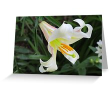 A Touch of White! Greeting Card