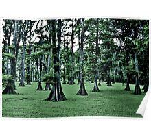 Dark Cypress Poster