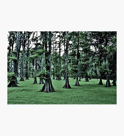 Dark Cypress Photographic Print