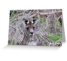 """""""What are you looking at?"""" Greeting Card"""
