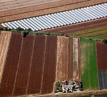 Italian Farm Geometry by phil decocco