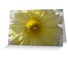 In Full Bloom Greeting Card