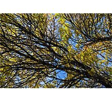Bright Yellow Fall Leaves in Autumn Oil Photograph Photographic Print