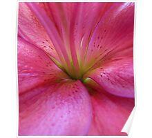 Rhubarb Bloom Poster