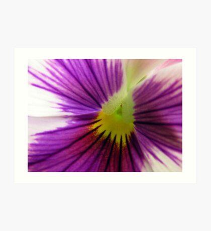 White and Purple Pansy Art Print