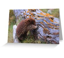 Cuddle the Echidna Greeting Card