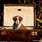 Boxer Puppy by Tawnydal