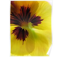 Yellow Pansy Trois Poster