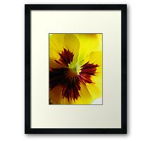 Yellow Pansy Une Framed Print