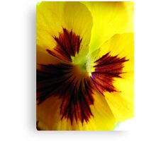 Yellow Pansy Une Canvas Print