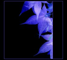 Ultra Violet Leaves on Black Background by AlysonArtShop