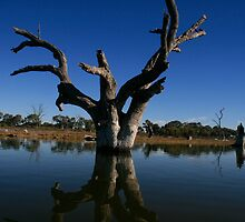 Wetlands near Barmera,S.A. by elphonline