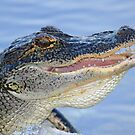 A gator with a smile! by jozi1