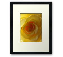 Yellow Rose Une Framed Print