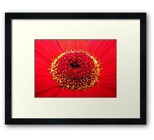 Red Gerbera Framed Print