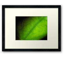 Green Leaf Framed Print