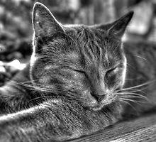 Kitty! by Sharlene Rens