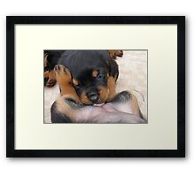 "Puppy Porn ....""The Bitches"" Framed Print"