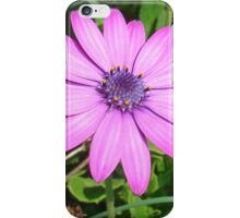 Single Pink African Daisy Against Green Foliage iPhone Case/Skin