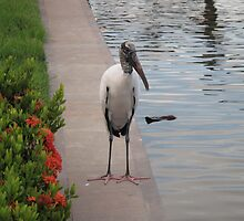 Florida crane by JessieT