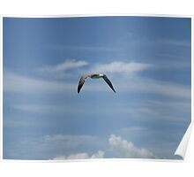 Seagull flying over Tampa Bay Poster