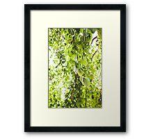 Willow Vert Framed Print