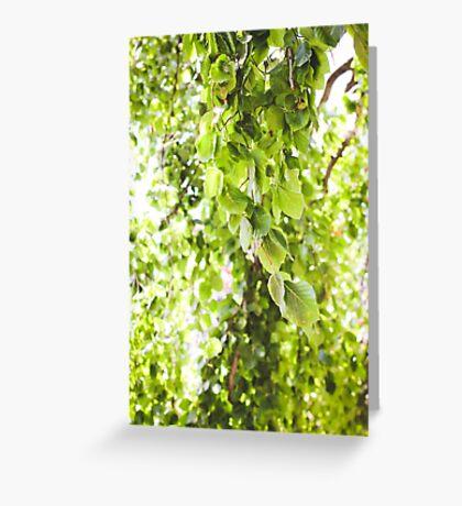 Willow Vert Greeting Card