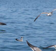 Scattering birds by JessieT