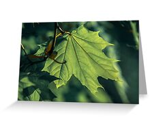 Green autumn Greeting Card
