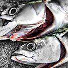 Freshly Caught Mackerel  by SNAPPYDAVE