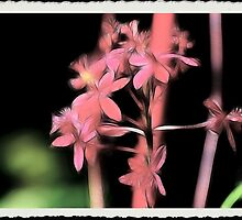 Fairy Lights: Summer Nights by Cherubtree