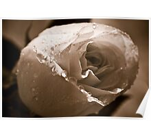 Sepia Water Droplets Flower Poster
