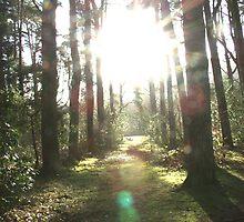 A glimpse of sunshine! by Naomi  Dowdeswell