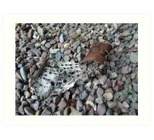 BEACH PEBBLES AND ASPEN BARK - GLACIER NATIONAL PARK Art Print