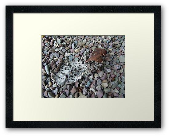 BEACH PEBBLES AND ASPEN BARK - GLACIER NATIONAL PARK by May Lattanzio