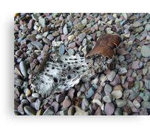 BEACH PEBBLES AND ASPEN BARK - GLACIER NATIONAL PARK Canvas Print