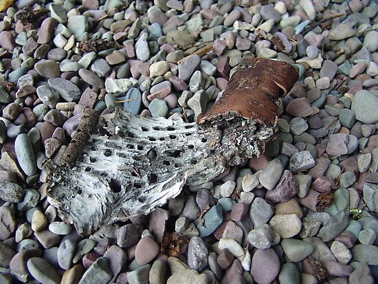 BEACH PEBBLES AND ASPEN BARK - GLACIER NATIONAL PARK by May Lattanzio