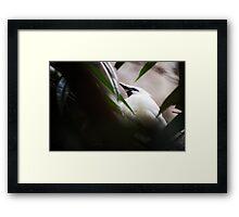 DC Zoo   Nature Framed Print