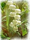 Lily of the Valley - In White #2 by MotherNature