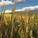 Wheatfield by Leoni Mullett