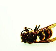 Wasp by yellowcheeks