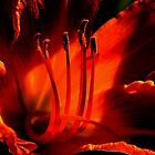 The Tiger Lily in My Garden ! by Elfriede Fulda