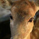 Bambi by Sea-Change