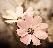 Cosmos Blush by Suzanne Cummings