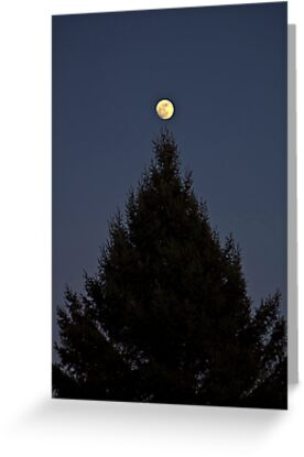 Tree Topper by Bill  Watson