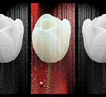 The White Tulip by MotherNature